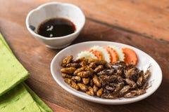 Collection de nourriture d'insecte photos stock