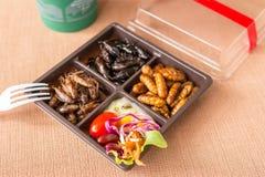 Collection de nourriture d'insecte image stock