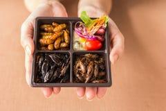 Collection de nourriture d'insecte images stock
