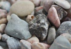 Collection de pierres de mer Photographie stock libre de droits
