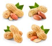 Collection de pistaches image stock