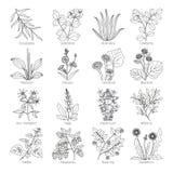 Collection de plantes et d'herbes de médecine illustration de vecteur