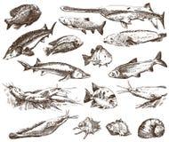 Collection de poissons Photos stock
