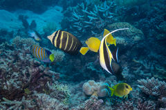 Collection de poissons image stock