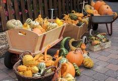 Collection de potirons colorés mûrs en automne Image libre de droits