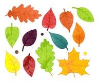 Collection de vecteur de style Autumn Leaves d'aquarelle Photo stock
