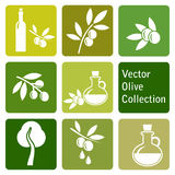 Collection de vecteur : icônes olives Image stock