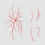 Collection de veines d'oeil humain, vaisseaux sanguins rouges, système de sang illustration de vecteur