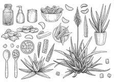 Collection de Vera d'aloès, illustration, dessin, gravure, encre, schéma, vecteur illustration de vecteur