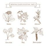 Collection de vintage d'herbes et de plantes médicales tirées par la main Photo libre de droits