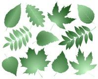 Collection de vintage de feuilles et de branches Photographie stock libre de droits