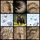 Collection de voies d'ours photos stock