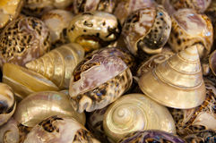 A collection of decorated shells. A collection of intricately painted and decorated seashells Stock Images