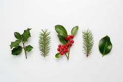 Collection of decorative Christmas plants with green leaves and stock photo