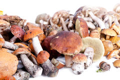 Collection of delicious edible mushrooms Stock Image