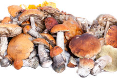 Collection of delicious edible mushrooms Royalty Free Stock Photo