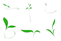 Collection of design elements. Collection of design light and small green leaf Royalty Free Stock Image