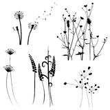 Collection for designers, meadow in summertime, plant vector set Royalty Free Stock Images