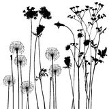 Collection, for designers, plant vector Royalty Free Stock Photos