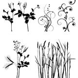 Collection for designers, plant vector Stock Images