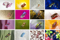 Collection of designs Royalty Free Stock Image