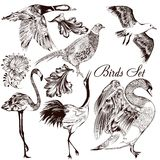 Collection of  detailed hand drawn birds Stock Image