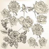 Collection of  detailed roses flowers Royalty Free Stock Photography
