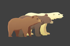 Collection with different cartoon bears  on dark background. Vector broun and black american bear. Set Wildlife. Illustration with different bears  on dark Stock Photos