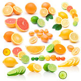 Collection of different citruses Stock Images