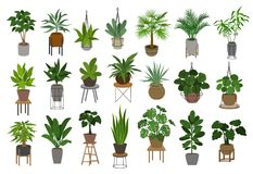 Collection of different decor house indoor garden plants in pots and stands