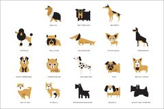 Collection of different dogs breeds characters and lettering breed in English vector Illustrations stock illustration