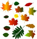 Collection of different fall foliage Stock Images