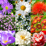 Collection of different flowers Stock Photo