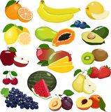 Collection of different fruits isolated on white background. vector illustration