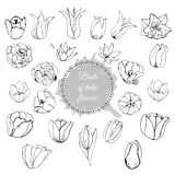 Collection of different hand drawn buds of tulip flowers. Monochrome composition with circle and abstract spot. royalty free illustration