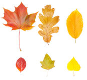 Collection of different leaves Stock Photography