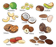 Collection of different nuts Royalty Free Stock Photography