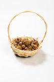 Collection of different oak acorns. In basket Stock Images