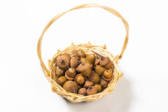 Collection of different oak acorns. In basket Royalty Free Stock Image