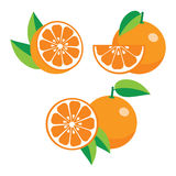 Collection of different oranges Royalty Free Stock Photo