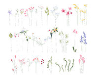 Collection of different stylized flowers Royalty Free Stock Photos
