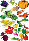 Collection of different vegetables. Royalty Free Stock Photos