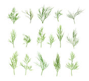 Collection of dill. On white background Stock Images