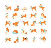 Collection of dog performing everyday activities on white background. Bundle of cute Japanese Shiba Inu pet eating