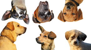Collection of dog portraits Stock Photos