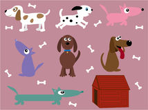 Collection of dogs Stock Images