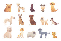 Collection dogs of Different Breeds. Vector  dogs on white background Stock Photos