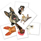 Collection of dogs photos Royalty Free Stock Image