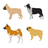 Collection of dogs Royalty Free Stock Photo