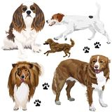 Collection of dogs. Vector collection of different dogs on white Stock Photos